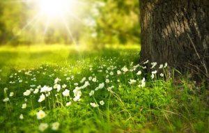 sun shining on open field